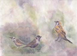 Sparrowsumi-epaper1